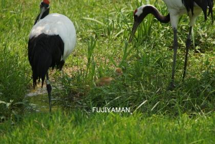 fujiyaman1