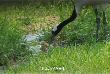 fujiyaman2
