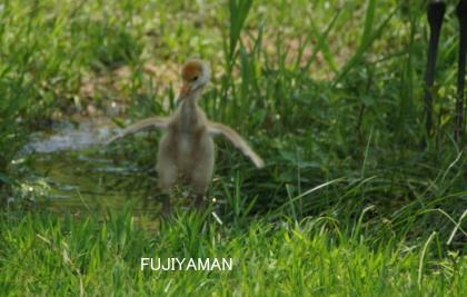 fujiyaman3